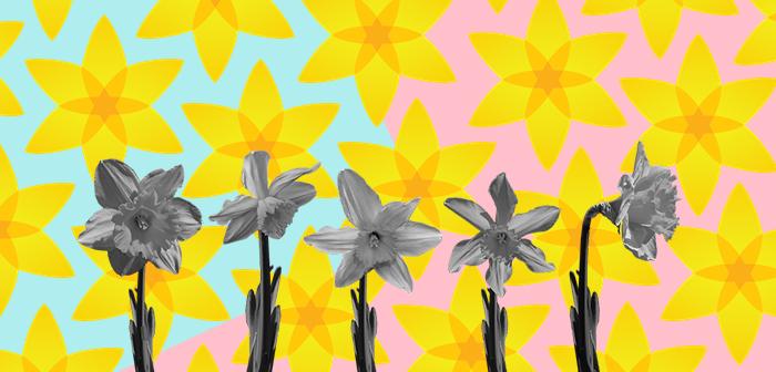 Жовті квіти на аватарах. 78 річниця повстання у варшавському ґетто